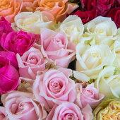 【ふるさと納税】OKM01日本一に輝いた阿波のバラをお届け!ローズガーデン徳島阿波バラ20本