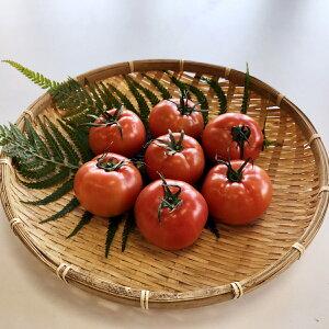 【ふるさと納税】TMD01【味自慢の土耕栽培】海部清流トマト12玉セット