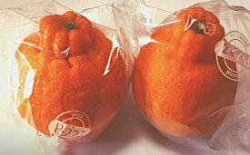 【ふるさと納税】特選低温貯蔵ハウス不知火 2L 2.8kg 【しらぬい・柑橘類・みかん・ミカン・果物・フルーツ】 お届け:2020年4月上旬〜4月下旬