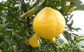 【ふるさと納税】はるか家庭用 2kg 【柑橘類・フルーツ・果物・みかん・ミカン】 お届け:2020年3月上旬〜3月下旬まで