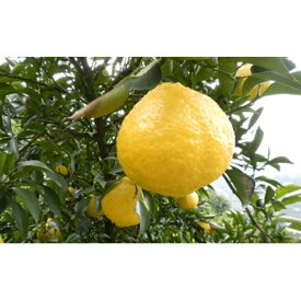 【ふるさと納税】はるか家庭用 2kg 【柑橘類・フルーツ・果物・みかん・ミカン 】 お届け:2020年3月上旬〜3月下旬