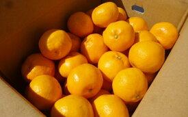 【ふるさと納税】はるみ 5kg 【みかん・柑橘類・果物・フルーツ】 お届け:2020年2月上旬〜2月下旬まで