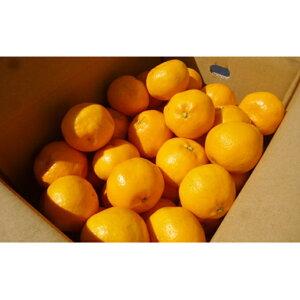 【ふるさと納税】はるみ 5kg 【みかん・柑橘類・果物・フルーツ 】 お届け:2020年2月上旬〜2月下旬まで
