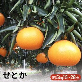 【ふるさと納税】せとか 5kg 【果物類・みかん・柑橘類・フルーツ・ミカン・5kg】 お届け:2021年2月上旬〜3月上旬