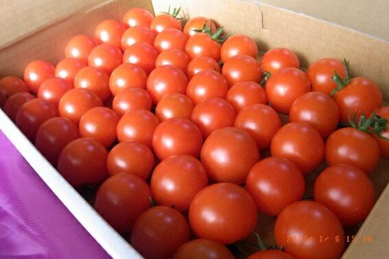 【ふるさと納税】井下農園のフルーツトマト 1kg 【野菜類/トマト】 お届け:2018年11月中旬〜2019年7月下旬