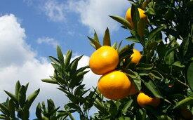 【ふるさと納税】ゆら早生みかん 大玉くん 10kg 【果物類・柑橘類・みかん・フルーツ】 お届け:2019年10月上旬〜10月中旬