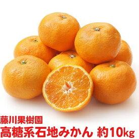 【ふるさと納税】温州みかん(石地) 10kg 【果物類・柑橘類・みかん・フルーツ 】 お届け:2020年12月中旬〜12月下旬