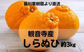 【ふるさと納税】味自慢!讃岐しらぬひ 5kg 【果物類・みかん・柑橘類・デコポン】 お届け:2020年2月下旬〜3月中旬