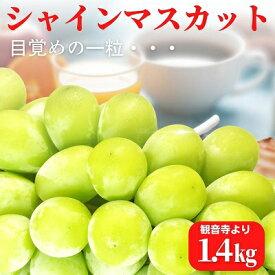 【ふるさと納税】シャインマスカット 約1.4kg 観音寺産 人気の採れたて ぶどう 【果物・ぶどう・フルーツ・葡萄・シャインマスカット・マスカット・約1.4kg・種なし】 お届け:2021年8月下旬〜9月下旬