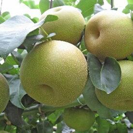 【ふるさと納税】ホウナンの梨(幸水梨) 【果物・フルーツ・ナシ】 お届け:2019年8月上旬〜8月中旬
