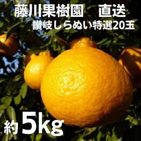 【ふるさと納税】特選20玉 しらぬひ(露地) 【果物類・みかん・柑橘類】 お届け:2020年3月上旬〜2020年3月中旬