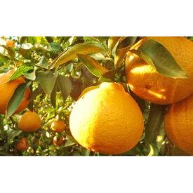 【ふるさと納税】特選24玉 しらぬひ(露地) 【果物類・みかん・柑橘類】 お届け:2020年3月上旬〜2020年3月中旬