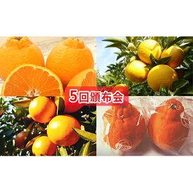 【ふるさと納税】【5回頒布会】フジカワ果樹園オリジナル・新季節の柑橘セット 【定期便・果物類・みかん・柑橘類・果物・詰合せ・フルーツ・定期便 】 お届け:2020年2月中旬〜