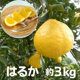 【ふるさと納税】はるか 約3kg 【果物類・柑橘類・フルーツ・みかん・ミカン】 お届け:2021年3月上旬〜3月下旬