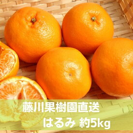 【ふるさと納税】はるみ 約5kg 【果物類・柑橘類・フルーツ・みかん・デコポン】 お届け:2021年1月下旬〜2月下旬