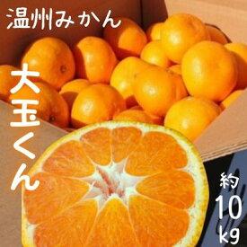 【ふるさと納税】温州みかん大玉くん 約10kg 【果物類・柑橘類・柑橘・みかん・ミカン・フルーツ・蜜柑・くだもの】 お届け:2021年10月上旬〜12月中旬