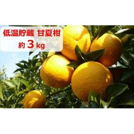 【ふるさと納税】低温貯蔵 甘夏柑 約3kg 【果物類・柑橘類・柑橘・みかん・ミカン・フルーツ】 お届け:2021年5月下旬〜6月中旬