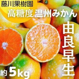 【ふるさと納税】高糖度温州みかん(由良早生)約5kg 【果物類・柑橘類・柑橘・みかん・ミカン・フルーツ・蜜柑】 お届け:2021年10月1日〜10月30日