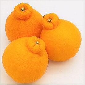 【ふるさと納税】味自慢!讃岐しらぬひ 約5kg 【果物類・柑橘類・柑橘・みかん・ミカン・フルーツ】 お届け:2021年2月中旬〜3月中旬