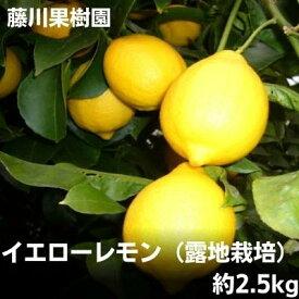 【ふるさと納税】イエローレモン(露地栽培)約2.5kg 【果物類・柑橘類・柑橘・レモン・檸檬・イエローレモン】 お届け:2021年1月15日〜3月15日