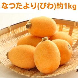 【ふるさと納税】なつたより(びわ)約1kg 【果物類・フルーツ・びわ・枇杷・なつたより・約1kg】 お届け:2021年5月下旬〜6月中旬