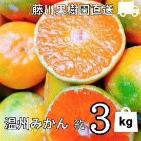 【ふるさと納税】農園直送 フジカワ果樹園栽培の 温州みかん 約3kg 【果物類・みかん・柑橘類・ミカン・温州みかん・約3kg・フルーツ】 お届け:2021年9月下旬〜12月上旬