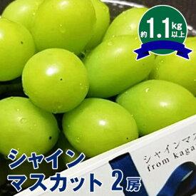 【ふるさと納税】シャインマスカット 2房(1.1kg以上) 【果物類・ぶどう・マスカット・フルーツ】 お届け:2019年8月下旬〜9月下旬