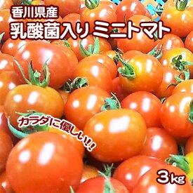 【ふるさと納税】令和元年初物「はなまる農園のミニトマト3kg」 【野菜・ミニトマト・トマト】 お届け:2019年11月20日〜2020年3月20日