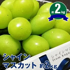 【ふるさと納税】シャインマスカット 約2kg 【果物類・ぶどう・マスカット・フルーツ・果物・ぶどう・フルーツ・果物類・フルーツ】 お届け:2020年8月下旬〜9月下旬