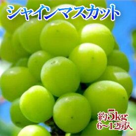 【ふるさと納税】シャインマスカット どっさり約5kg 【果物類・ぶどう・マスカット・フルーツ・果物】 お届け:2021年8月下旬〜9月下旬