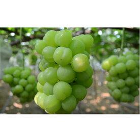 【ふるさと納税】種なし皮ごと「瀬戸ジャイアンツ」約2kg 【果物類・ぶどう・マスカット・フルーツ・果物・ぶどう・フルーツ・果物類・フルーツ】 お届け:2020年8月下旬〜9月下旬