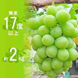 【ふるさと納税】【期間限定先行予約】約1.5kgのシャインマスカット 【果物類・ぶどう・マスカット・フルーツ・果物】 お届け:2020年8月下旬〜9月下旬