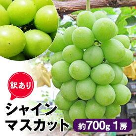 【ふるさと納税】訳あり[シャインマスカット]約700g1房 【果物類・フルーツ・果物・ぶどう・シャインマスカット・訳あり・マスカット・ブドウ】 お届け:2021年8月下旬〜2021年10月上旬