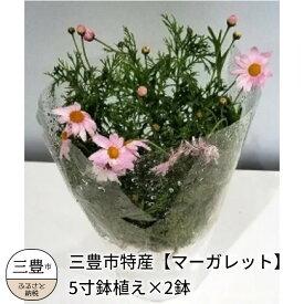 【ふるさと納税】三豊市特産【マーガレット】5寸鉢植え×2鉢