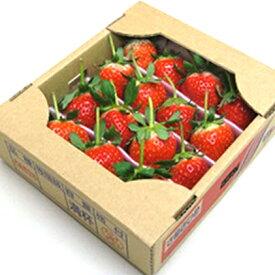 【ふるさと納税】【年内発送】 さぬきひめ苺 つる付き約400g 【果物類・いちご・苺・イチゴ】 お届け:2020年11月中旬〜12月下旬