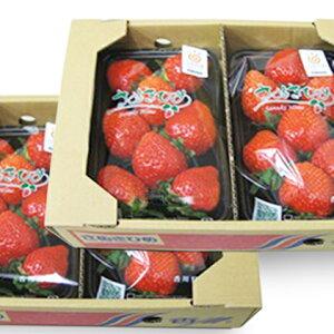 【ふるさと納税】【年内発送】 さぬきひめ苺 1kg 【果物類・いちご・苺・イチゴ】 お届け:2019年11月中旬〜12月下旬