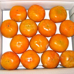 【ふるさと納税】柿の王様 富有柿 たっぷり7kg 【果物類】 お届け:2019年11月中旬〜12月上旬