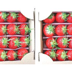 【ふるさと納税】【1月〜順次発送】さぬきひめ苺 つる付き約400g×2箱 【果物類・いちご・苺・イチゴ】 お届け:2021年1月中旬〜4月下旬