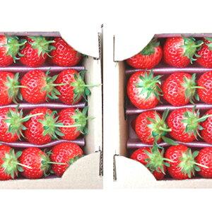 【ふるさと納税】【1月〜順次発送】さぬきひめ苺 つる付き約400g×2箱 【果物類・いちご・苺・イチゴ】 お届け:2020年1月中旬〜4月下旬