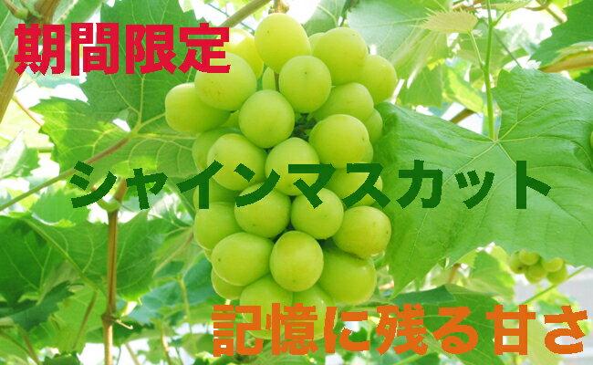 【ふるさと納税】香川県産シャインマスカット2.0キロ