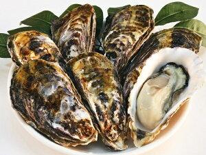【ふるさと納税】(予約受付中:旬にお届け!2022年1月から期間限定出荷!)殻付き活牡蛎カンカン焼セット 4.5kg (加熱用)〔提供:株式会社 牡蛎屋りょうせん〕