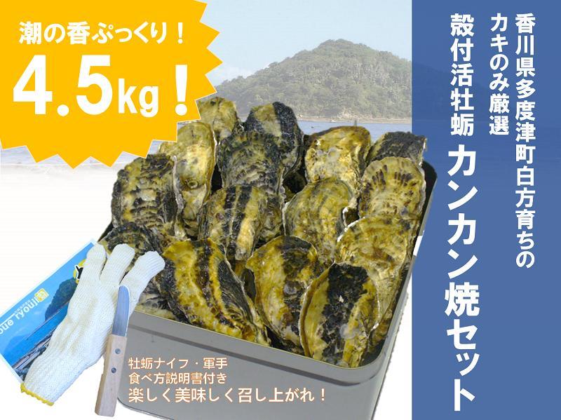 【ふるさと納税】(予約受付中:旬にお届け!2019年2月からの期間限定出荷!)殻付き活牡蛎カンカン焼セット 4.5kg (加熱用)〔提供:株式会社 牡蛎屋りょうせん〕