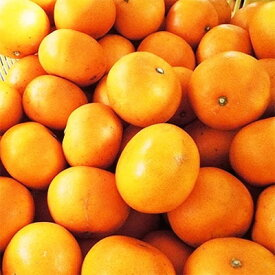 【ふるさと納税】愛媛の高級柑橘の代名詞!「せとか」約3.5kg入【C28-18】【1046129】