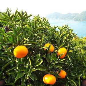【ふるさと納税】愛媛の高級柑橘の代名詞!「せとか」約3kg入(化粧箱入)【1046131】