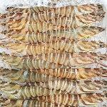 【ふるさと納税】八幡浜発!竹中水産の「天然車海老中ぶりで40匹前後」ーたっぷり食べて大満足。【1047025】