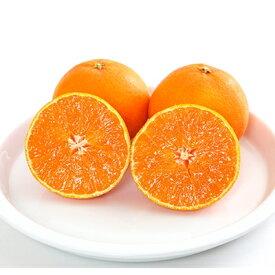 【ふるさと納税】コウ果樹園の「柑橘の王様 せとか3kg」【C33-1】【1056132】