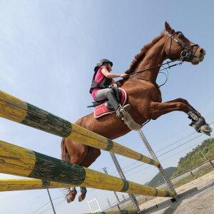 【ふるさと納税】初心者向けビジター乗馬体験エヒメ乗馬クラブ(小学生以上1名30分+引き馬1周)