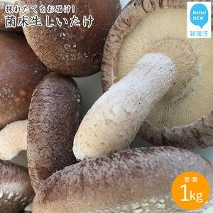 【ふるさと納税】厳選!!新居浜産菌床生しいたけ 1kg