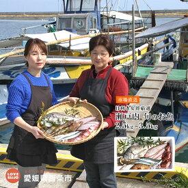 【ふるさと納税】<目利き女将厳選 瀬戸内の旬のお魚 2.5kg〜3.5kg> ※翌月末迄に順次出荷します。 愛媛県 西条市 ふるさと納税 【冷蔵】