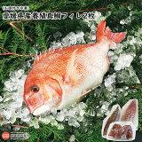 愛媛県養殖真鯛フィレ2枚(お頭付き冷凍)
